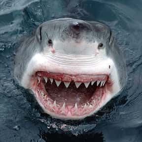 Jaws is listed (or ranked) 13 on the list The Fictional Monsters You'd Least Like to Have After You