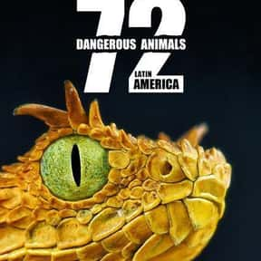72 Dangerous Animals: Latin Am is listed (or ranked) 2 on the list The Best Nature & Animal Shows On Netflix