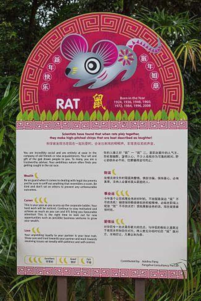 Rat (Zodiac) is listed (or ranked) 1 on the list Chinese Zodiac Signs