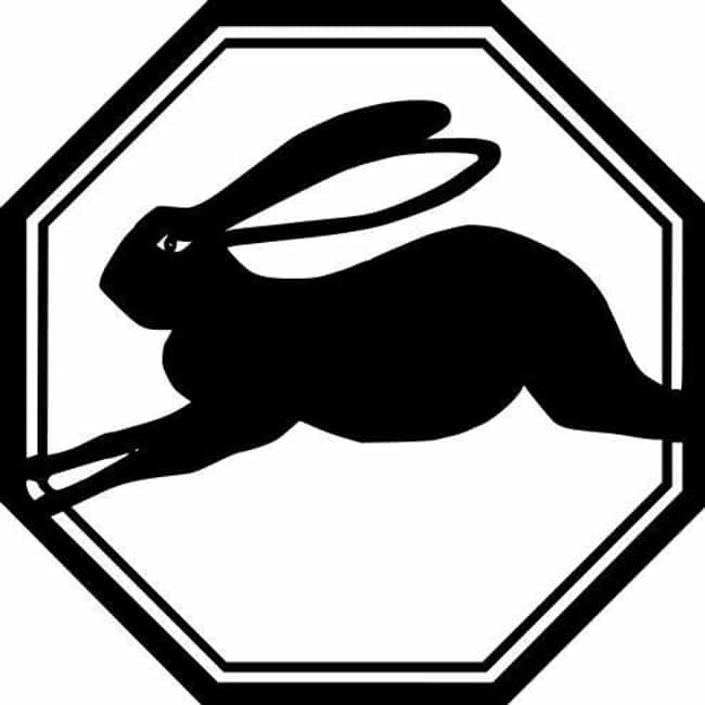 Rabbit (Zodiac) is listed (or ranked) 4 on the list Find Out Your Chinese Zodiac Sign And What It Says About You