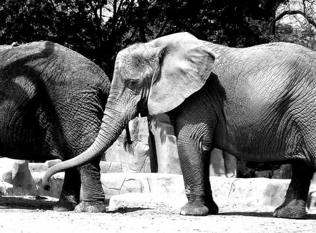 Elephant Nature Park is listed (or ranked) 4 on the list The Best Vacation Spots for Animal Lovers