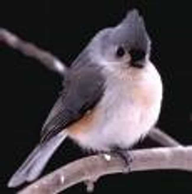 Titmouse is listed (or ranked) 3 on the list Words That Sound Dirty But Aren't