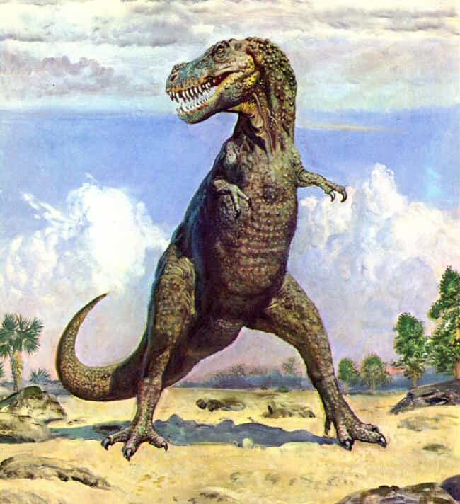 Hunched Widow is listed (or ranked) 1 on the list Proof Science Hates the Tyrannosaurus Rex