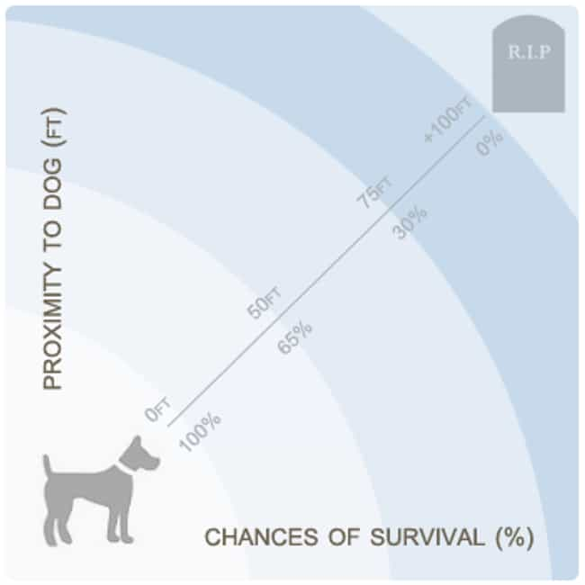 Own A Dog is listed (or ranked) 1 on the list How To Survive a Disaster Movie
