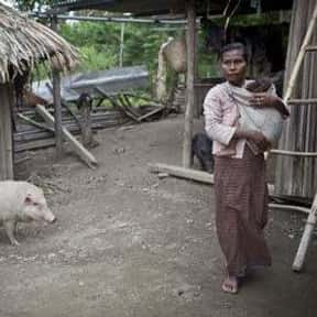 TimorLeste is listed (or ranked) 4 on the list Swine Flu Cases Around The World