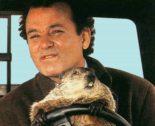 Bill Murray - Groundhog ... is listed (or ranked) 1 on the list 10 Oscar-Worthy Comedy Performances the Academy Ignored