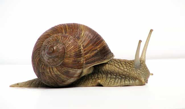 Snail Slime Cream - Chile is listed (or ranked) 3 on the list The 14 Most Bizarre Beauty Treatments Women Have Ever Used