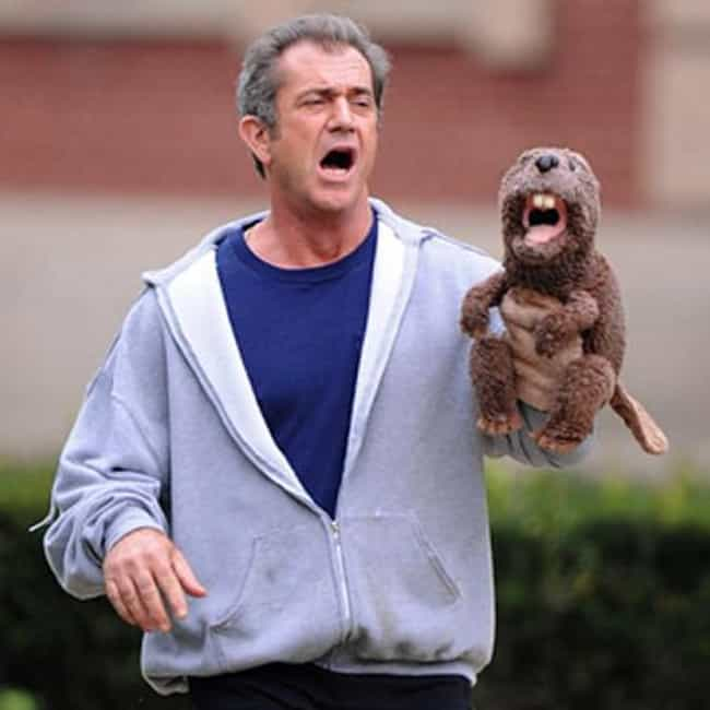 You look like a f---ckin... is listed (or ranked) 2 on the list The Most Offensive Mel Gibson Quotes