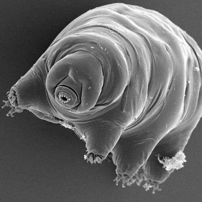 Tardigrades is listed (or ranked) 3 on the list The 10 Geekiest Things Sent Into Space