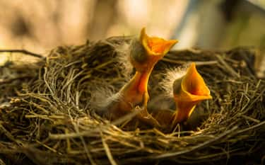 Baby Birds Will Be Rejected By is listed (or ranked) 1 on the list 16 Untrue Myths About Animals