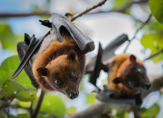 Bats Are Blind is listed (or ranked) 3 on the list 16 Untrue Myths About Animals