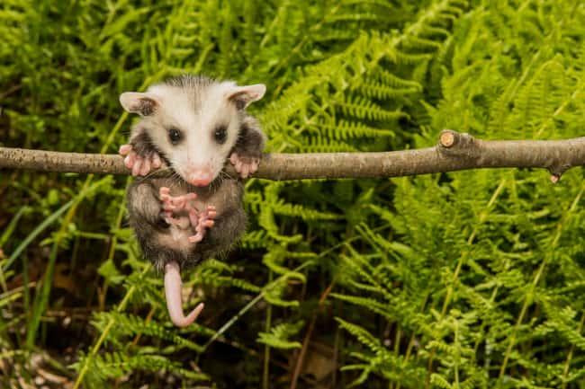 10 Mitos Biolgi Tidak Benar Tentang Hewan