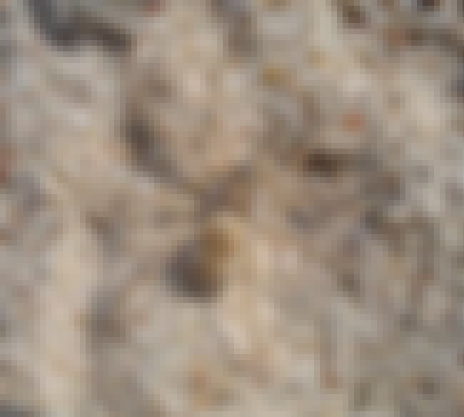 Sand is listed (or ranked) 2 on the list 10 Amazing Insects and Spiders With Extraordinary Camouflage Abilities