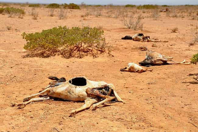 Somalia/East Africa Fami... is listed (or ranked) 2 on the list The Worst Droughts And Famines In History