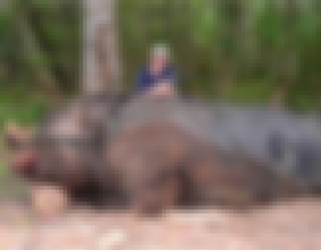 Alabama Boy Kills Giant Boar is listed (or ranked) 8 on the list The 10 Strangest, Most Terrifying Creatures Ever Found