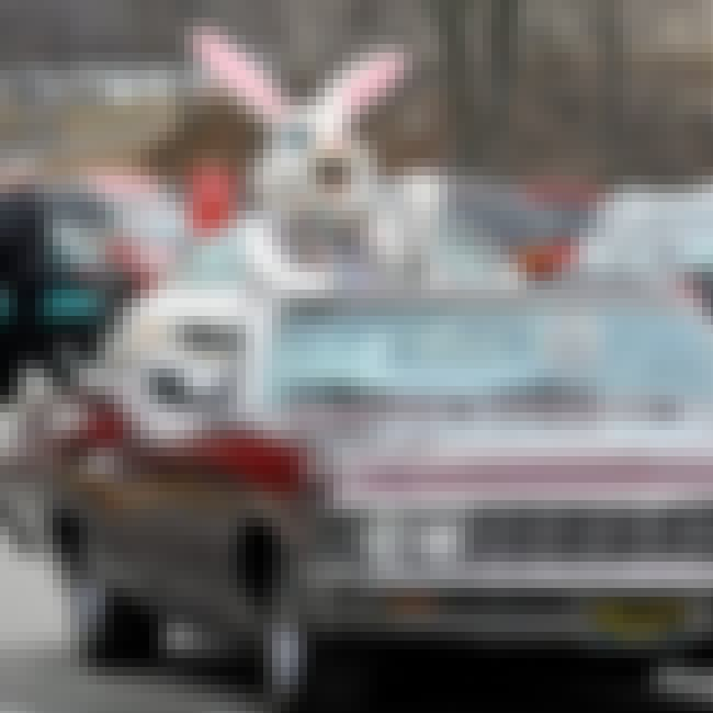 Easter Bunny Harasses Local St... is listed (or ranked) 6 on the list The 12 Craziest Bunny Costume Arrests