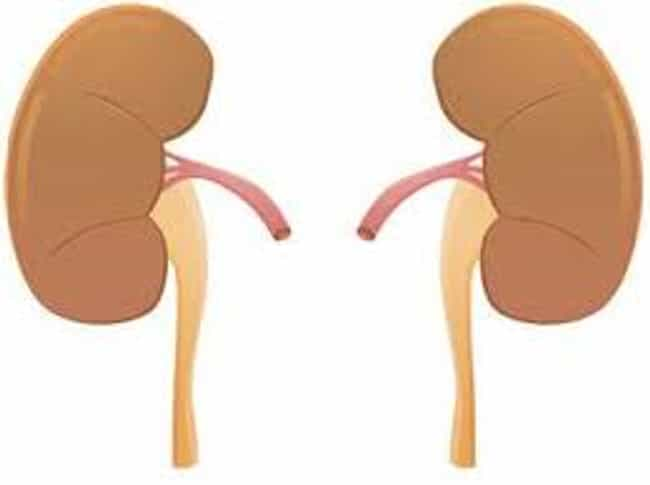 Change in Urination is listed (or ranked) 1 on the list 10 Telling Symptoms of Kidney Disease