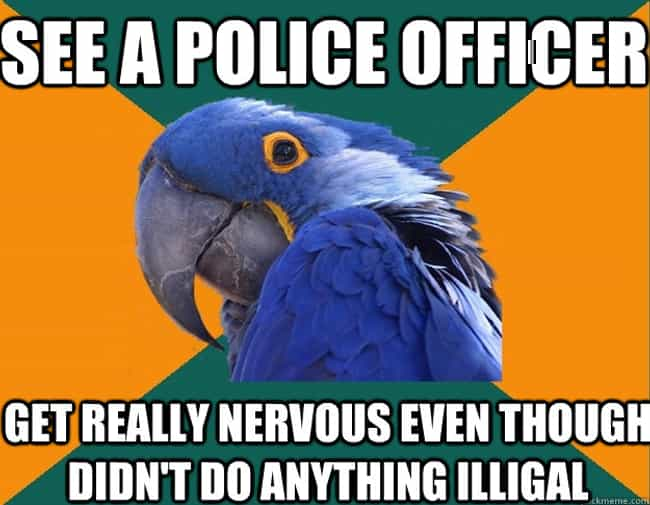 The Very Best of the Paranoid Parrot Meme