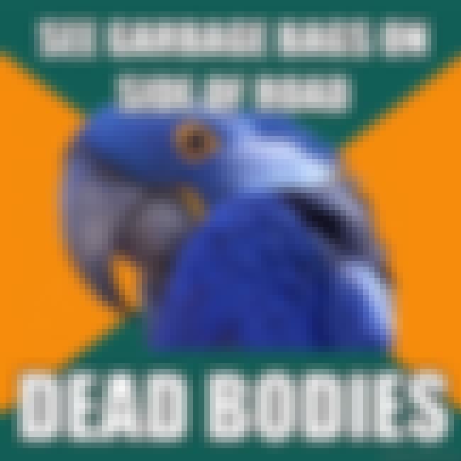 Paranoid Parrot Sees Dead Bodi... is listed (or ranked) 2 on the list The Very Best of the Paranoid Parrot Meme