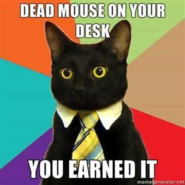 business cat meme list of funny business cats