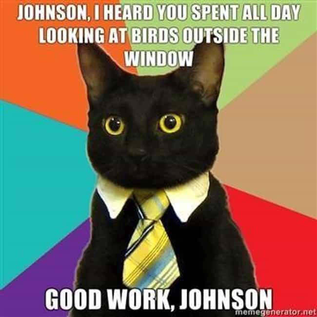 business-cat-on-time-use-photo-u1?w=650&