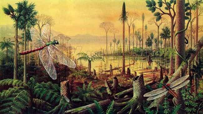 Carboniferous - From 354 - 290... is listed (or ranked) 6 on the list Earth History in 11 Easy Steps