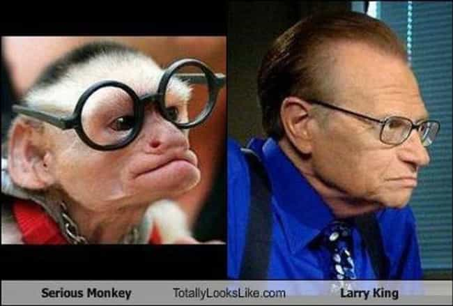 Celebrity Animal Look Alikes People That Look Like Animals - People cartoon look alikes