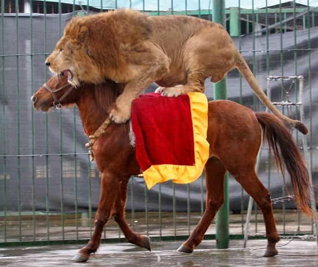 The 26 Greatest Pictures of Animals Riding Other Animals