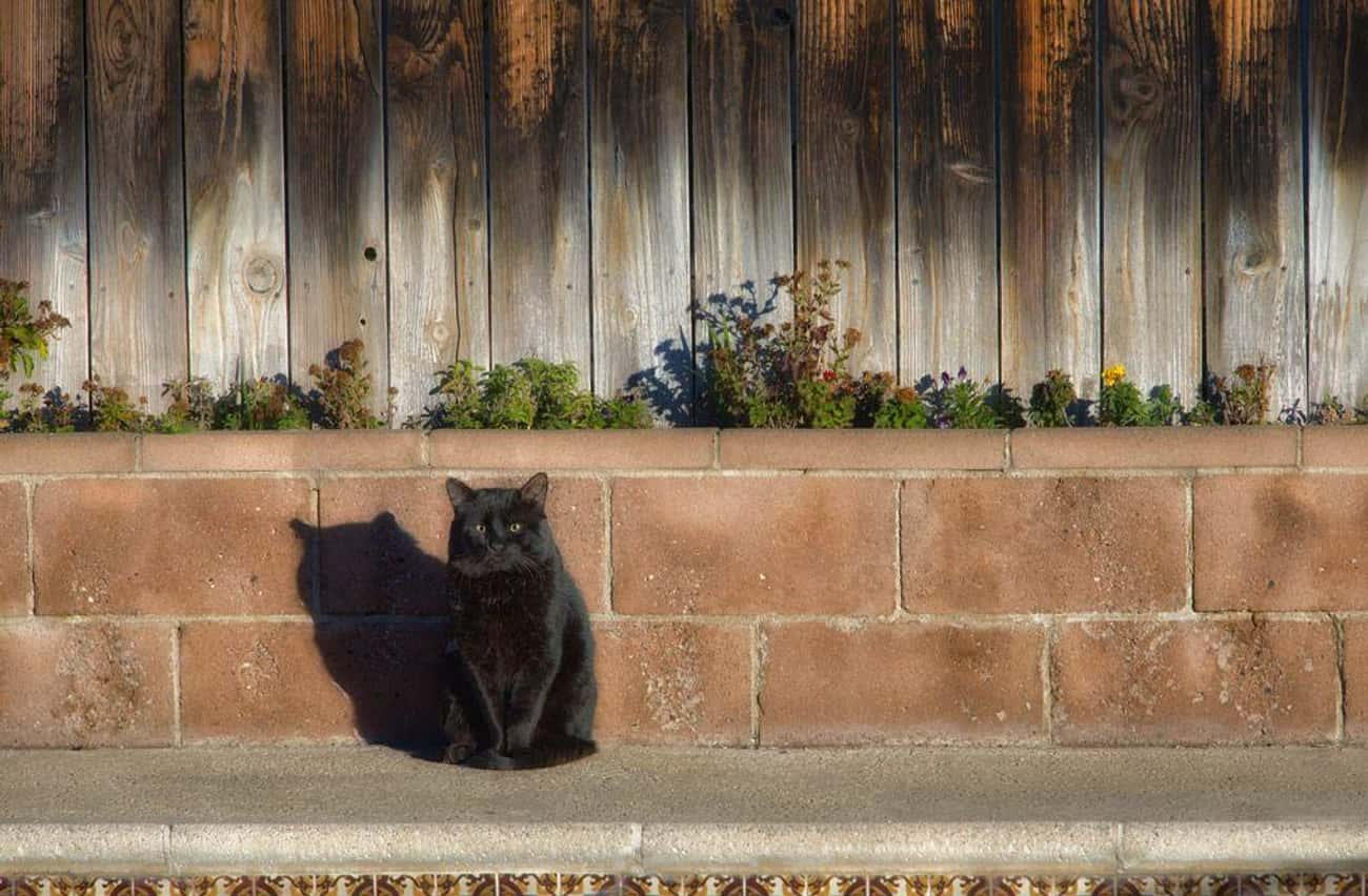 Black Cat Crossing Your Path is listed (or ranked) 1 on the list The Origins of the 13 Most Common Superstitions