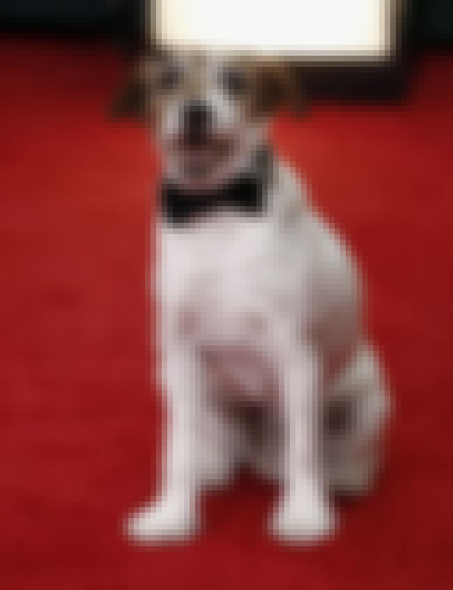 Uggie the Dog is listed (or ranked) 4 on the list The Best Golden Globes 2012 Red Carpet Fashions