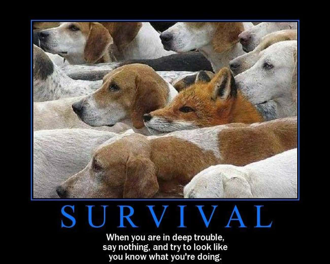 Survival is listed (or ranked) 4 on the list The 36 Funniest Demotivational Posters