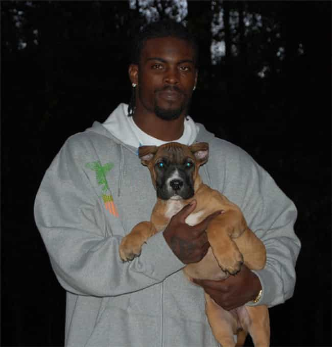 Michael Vick's Dogfighting Rin... is listed (or ranked) 3 on the list The 14 Most Shocking NFL Scandals