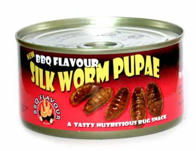 Canned Silkworm Pupae is listed (or ranked) 4 on the list The Most Disgusting Canned Foods