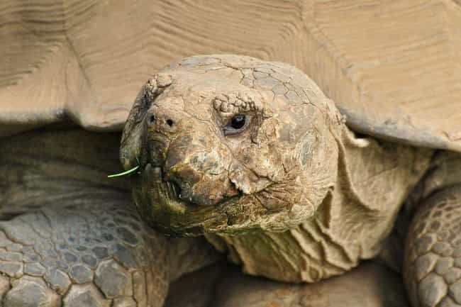 Hundreds Of Tortoises is listed (or ranked) 3 on the list Amazing Things Found in Abandoned Luggage