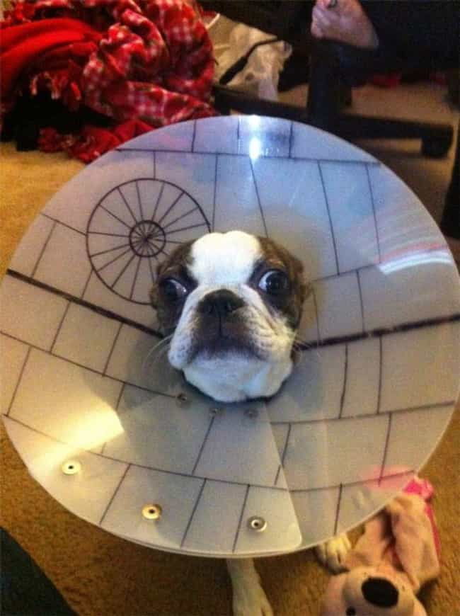 The Death Cone is listed (or ranked) 2 on the list 23 Animals Wearing Star Wars Costumes