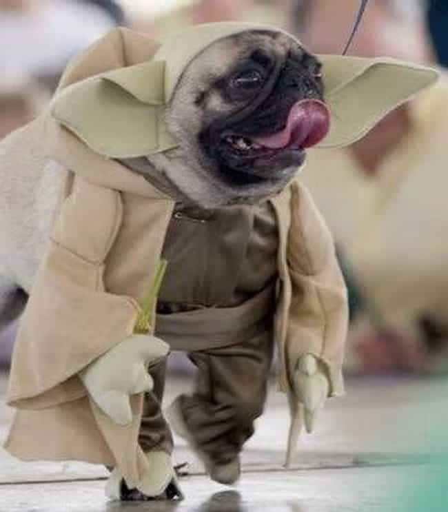 Size matters not, ... Look at ... is listed (or ranked) 4 on the list 23 Animals Wearing Star Wars Costumes