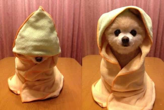 Learning You Are, Young Padawa... is listed (or ranked) 1 on the list 23 Animals Wearing Star Wars Costumes