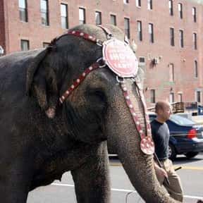 Elephant on the parking meter is listed (or ranked) 5 on the list Weird Laws in Florida