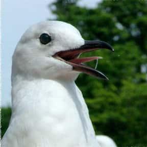Spitting on a sea gull