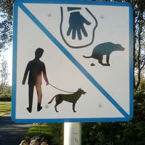 Picking Up Dog Poo is listed (or ranked) 2 on the list The Tasks You Loathe The Most