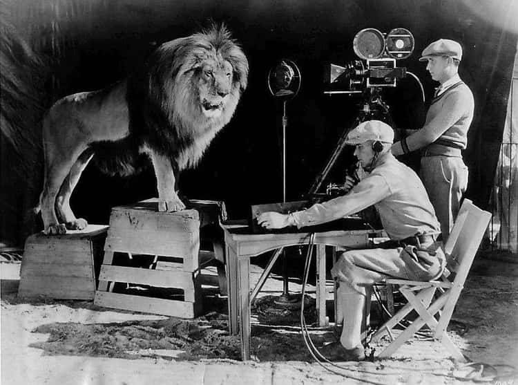 The Actual MGM Lion Being Filmed