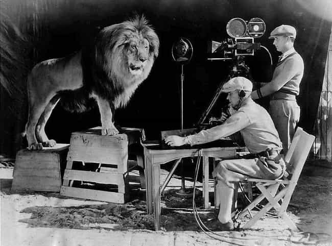 The Actual MGM Lion Bein... is listed (or ranked) 1 on the list 95+ Amazing Behind the Scenes Photos from Iconic Movies