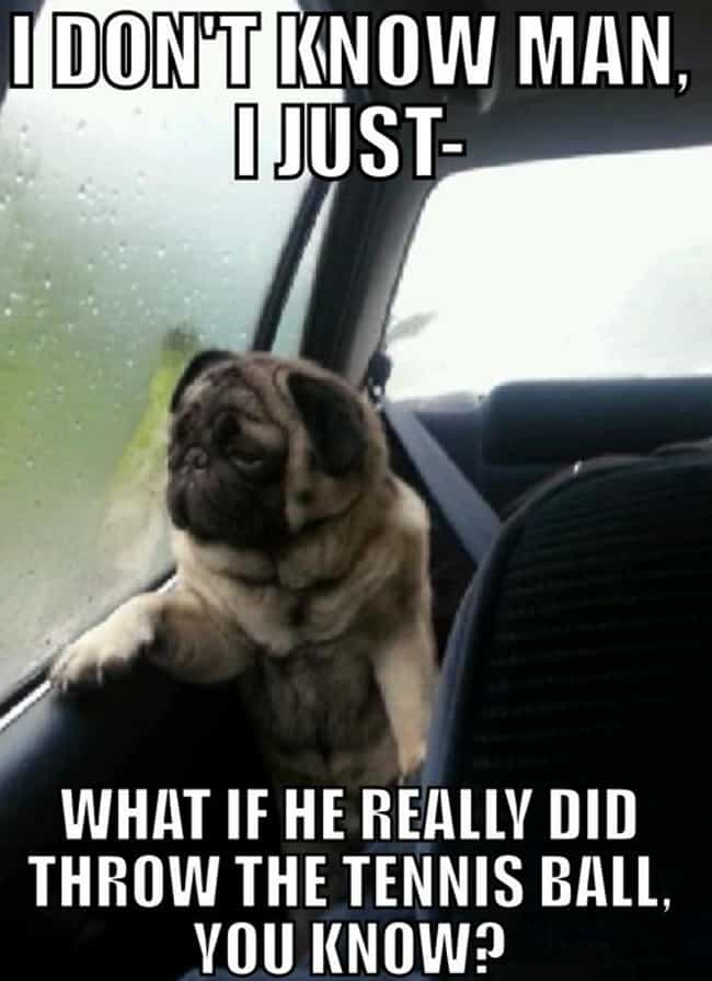 On Trickery is listed (or ranked) 1 on the list The Very Best of the Introspective Pug Meme