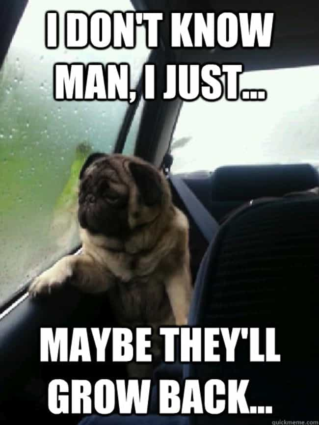 On Loss is listed (or ranked) 2 on the list The Very Best of the Introspective Pug Meme
