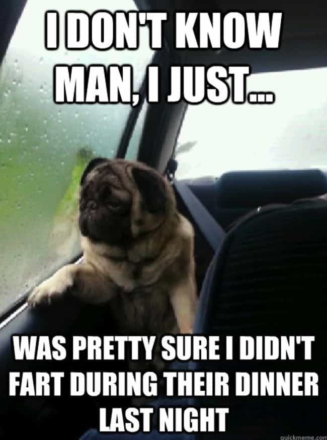 On Blame is listed (or ranked) 4 on the list The Very Best of the Introspective Pug Meme
