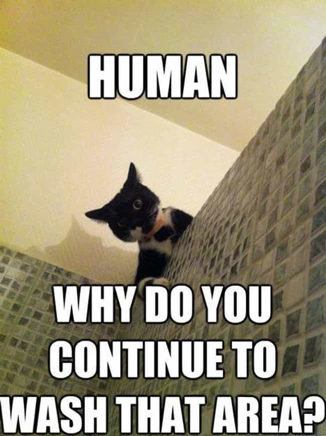 On Washing is listed (or ranked) 4 on the list The Very Best of Incredulous Cat Meme