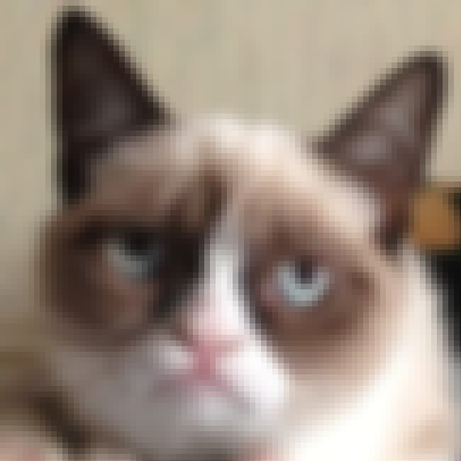 Grumpy Cat is listed (or ranked) 3 on the list The 50 Greatest Internet Memes of 2012