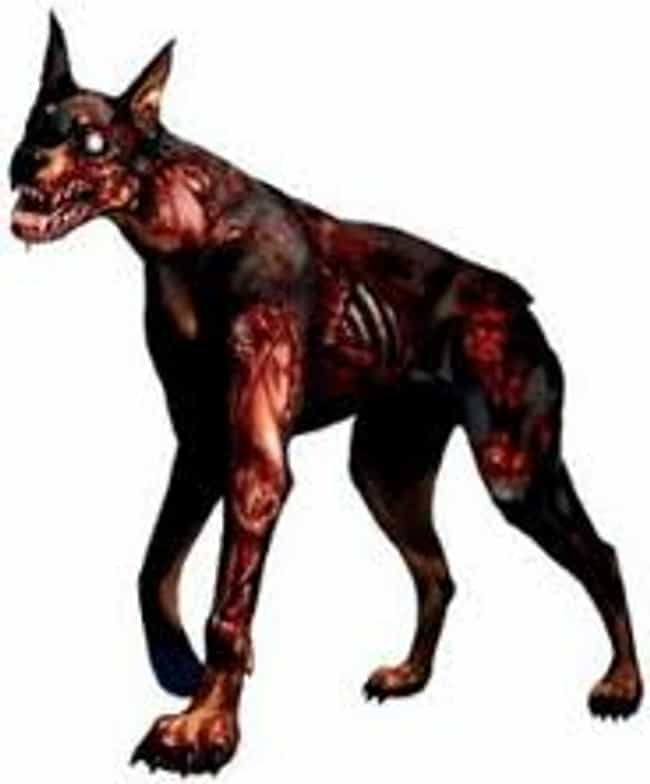 Dogs is listed (or ranked) 1 on the list Zombie Apocalypse: Animals That Would Make Scary Zombies...