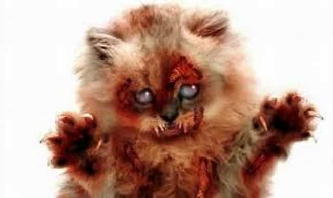 Cats is listed (or ranked) 4 on the list Zombie Apocalypse: Animals That Would Make Scary Zombies...