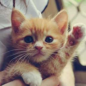 Kitten is listed (or ranked) 4 on the list The Best Pets for Kids